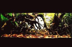 Amazon Biotope Tank ...