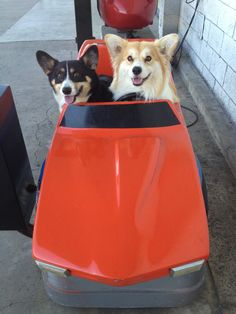 Baby, You Got a Fast Car - Ed and Jiggles, two Pembroke Welsh Corgis from twosillycorgis
