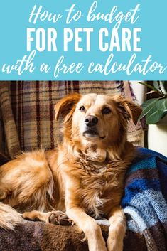 How much does it cost to own a dog? Well, a lot, but there are many ways to cut those costs! Here, tips to budget for pet care, plus a free calculator! Cat Care Tips, Dog Care, Puppy Care, Massage, Puppy Classes, Endocannabinoid System, Cute Dog Pictures, Beautiful Pictures, Veterinary Care