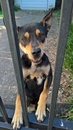 lizardmarsh: Memphis TN: Found: Sweet, friendly dog in Pink Palace area