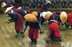 © Ernst Haas - Planting Festival 1984: People in straw hats and red trousers perform the rice planting festival in a paddy field in Nara, Japan. The bright reds with their contrasting blues and yellows evoke a relatively vibrant mood.
