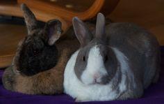 Jessica and Roger Rabbit. :)