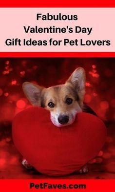 Get your favorite pet lover a gift from the heart for Valentine's Day. Gifts For Pet Lovers, Pet Gifts, Dog Lovers, Valentine Gifts For Girlfriend, Valentines Day Gifts For Her, Valentine Crafts, Love Pet, Puppy Love, Dog Mom