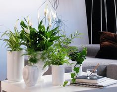 Luftrensende grønne planter og blomster i hjemmet