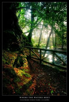 Tollymore Forest Park in Co Down, Northern Ireland