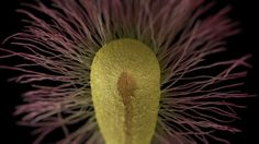 The Magic of Seeds and the Science of Insuring Earth's Future | Brain Pickings