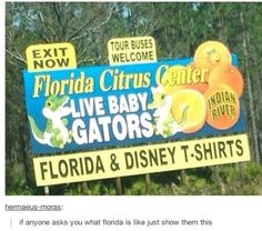 Funny pictures about Florida In A Nutshell. Oh, and cool pics about Florida In A Nutshell. Also, Florida In A Nutshell photos. Tumblr Funny, Funny Memes, Jokes, Florida Funny, Dump A Day, Picture Day, I Love To Laugh, Tumblr Posts, Funny Posts