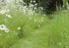 We Please Be Less Fanatically Tidy? A path through a garden allowed to grow long and go to meadow.A path through a garden allowed to grow long and go to meadow. Meadow Garden, Dream Garden, Wild Flower Meadow, Wild Flowers, Natural Garden, Edible Garden, Back Gardens, Garden Planning, Garden Paths