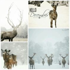 Hello December. #moodboard #mosaic #collage #byJeetje♡