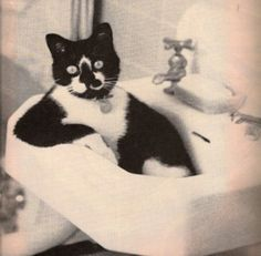 """""""Howdy m'am...it's me,  Spike,  from Tuxedo Plumbing Inc...you called for service on a clogged sink?"""""""