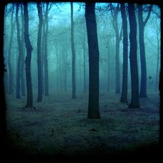 """Foggy Forest Trees""  from the Etsy Seller Troubled  http://www.etsy.com/listing/72232140/foggy-forest-trees-5x5-photography-print"