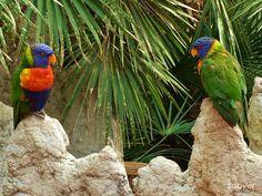 Vogelpark Avifauna - Alphen aan den Rijn, Netherlands