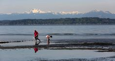 Low-tide exploration near Duwamish Head | The Seattle Times