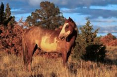 The Wild Mustangs of Oregon's Steens Mountains.  I love horses and would love to see some wild mujstangs in Eastern Oregon.