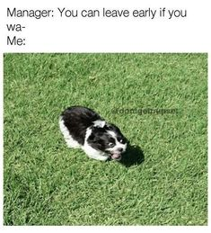Funny Animal Pictures with Captions to Make You LOL - 35