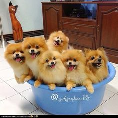 bowl full of happiness
