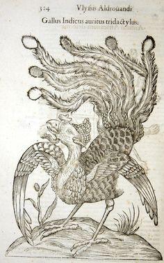 Gallus Indicus auritus tridactylus (p. 324) -- Woodcut of chicken monster by Aldronvandi, 1570 -- See more at: http://hos.ou.edu/galleries/16thCentury/Aldrovandi/1570/