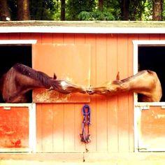 kissing-horses