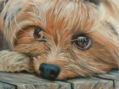 It's always fun to paint pets because they show so much emotion in their faces. In this class you will learn to paint a Yorkshire Terrier. During the class you will learn: 1) How cropping a photo can add extra drama to the scene 2) How to create a hair effect without painting every hair …