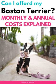 There are three types of Boston Terrier dog owners: 1) Covers the basics. 2) Pampers their dog 3) Dog is dogchild. Monthly cost $70 to $1,620 per month depending on how your view your dog and how you raise them.  I break down the different scenarios.