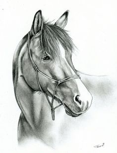 Reference photo Done with mechanical pencil Usually I like draft horses more than Arabians, but somehow I liked this picture and as it was a stock image, I decided to give it a try. The result - we...