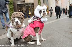 Two Pitties in the City: DoggyStyle: Saving Money with Human Gear for Dogs
