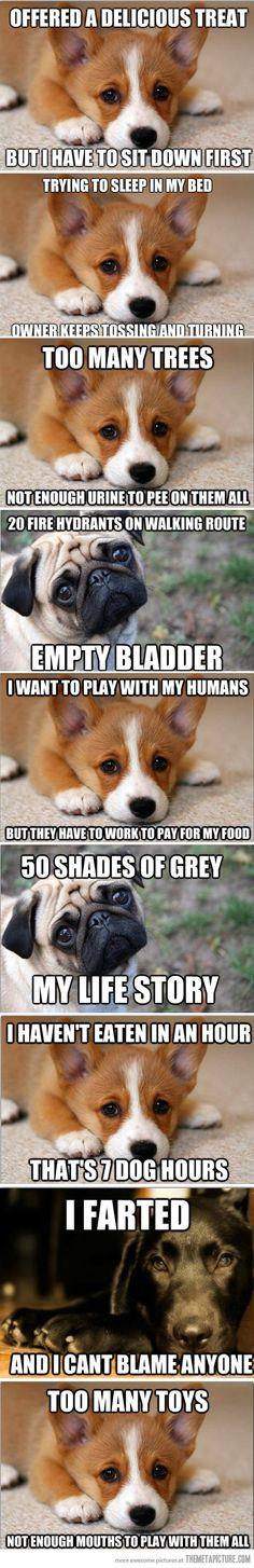 Puppy problems…