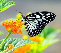 butterfly effect by ~blacksheepwall