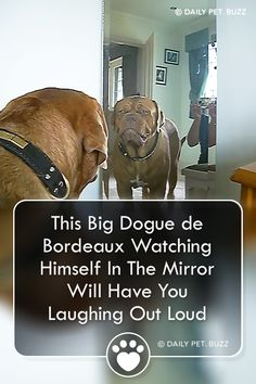 There is just something so sweet when puppies see themselves in the mirror. It is hard to look away when they are so funny. Funny Animal Videos, Videos Funny, Funny Animals, Baby Animals, Funny Dogs, Cute Dogs, Boxer Dog Quotes, Big Dog Breeds, Old Dogs