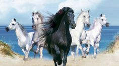 Animals Wallpapers Fantasy Beautiful Horses - View All