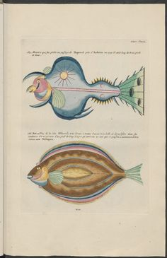 Louis Renard's famous book, 'Poissons, Ecrevisses et Crabes' (or 'Natural History' / 'Natuurlyke Historie'), featuring extraordinary alien fish and sea creature illustrations by Samuel Fallours was first published in 1719