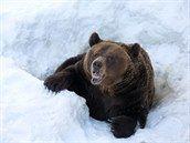 Pita placky zvládnete upéct doma, i s dětmi. Nemůže to být jednodušší - iDNES.cz Brown Bear, Animals, Animales, Animaux, Animal, Animais