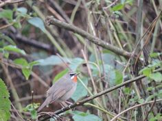 Bird watching tours in Northeast India. Contact us : www.neroutes.com