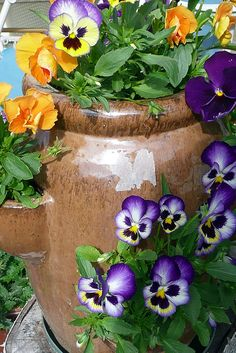 Pansies in a Strawberry Pot