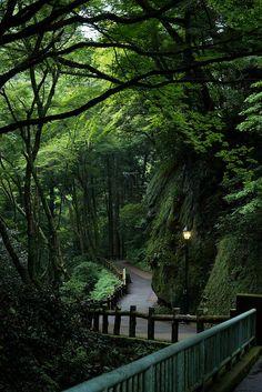 Minoo Park, Osaka, Japan - Photography, Landscape photography, Photography tips Osaka Japan, Okinawa Japan, Nature Aesthetic, Travel Aesthetic, Aesthetic Japan, Places To Travel, Places To See, Travel Local, Beautiful World