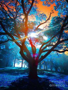 ✯ Blue Leaf Autmn