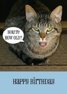 Found On Bing Denise Reed Cat Birthday Cards
