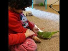 The parrot finally got Hanna. Hanna was messing with parrot when the parrot finally got her. Funny kids with parrot. Toddler Videos, Baby Videos, Kids Videos, Funny Laugh, Stories For Kids, Funny Kids, Parrot, Children, Youtube