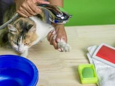 Is your cat scratching like crazy?  Are fleas taking over your house?  If so, you may be surprised to discover that there's a natural flea treatment that can kill the fleas on your cat quickly and safely, without chemicals.