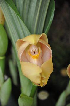 Las 5 flores con formas más raras del mundo