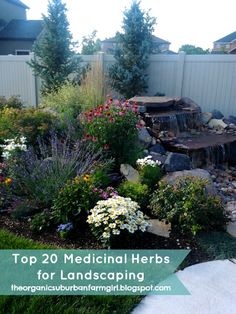 Top 20 Medicinal Herbs for Landscaping: Jordan Valley Home Garden Club http://club.conservationgardenpark.org/2013/05/edible-gardening-week-7-top-20-medicinal-herbs-for-landscaping/