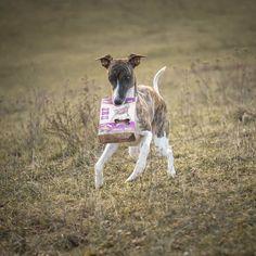 Dogs, Youtube, Animals, Instagram, Animales, Animaux, Pet Dogs, Doggies, Animal