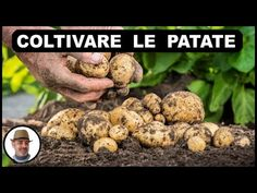 Natura è Bellezza - YouTube Beans, Vegetables, Youtube, Feltro, Lawn And Garden, Beans Recipes, Veggie Food, Vegetable Recipes, Youtubers