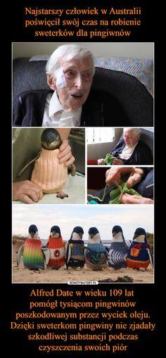 Alfred Date w wieku 109 lat pomógł tysiącom pingwinów poszkodowanym przez wyciek oleju. Dzięki sweterkom pingwiny nie zjadały szkodliwej substancji podczas czyszczenia swoich piór – Funny Mems, Everything And Nothing, Extraordinary People, Keep Smiling, Humanity Restored, Be A Nice Human, Life Lessons, Fun Facts, Haha