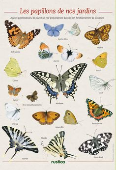 Butterflies of gardens in France - Illustrations: Frances Isabelle - Rustica Your House Your Garden