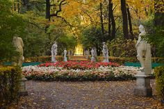 """Park """"Summer garden"""" avenue in the autumn morning with flower bed. French Formal Garden, Russian Culture, Peter The Great, Summer Palace, Autumn Morning, Famous Architects, Summer Garden, Flower Beds, Where To Go"""
