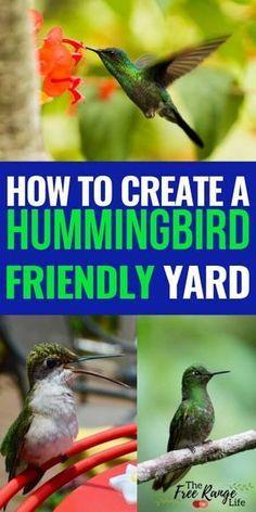 How to Attract Hummingbirds to Your Garden and Hummingbird Feeders Wie man Kolibris zu Ihrem Garten Hummingbird Habitat, Hummingbird House, Hummingbird Flowers, Hummingbird Feeder Recipe, Flowers That Attract Hummingbirds, How To Attract Birds, Attracting Hummingbirds, What To Feed Hummingbirds, Garden Types