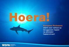 GOED NIEUWS: Het Europees Parlement stemde met een overweldigende meerderheid voor een verbod op het afsnijden van haaienvinnen en het teruggooien van de dieren in zee, waar ze sterven.
