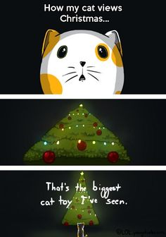 Why cats attack Christmas trees...