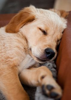 One perfect way to end a long day is to snuggle with a warm puppy. Repin if you agree! ___ Dogs Lover?? Visit our website now! :-)